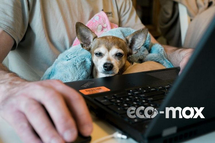 How to prolong the life of your electrical equipment now more of us are working from home.